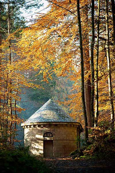 Georgian Follies, magical forest and magnificent trees